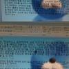 #037-2 「ぼのぼの」が韓国で妙に人気な理由